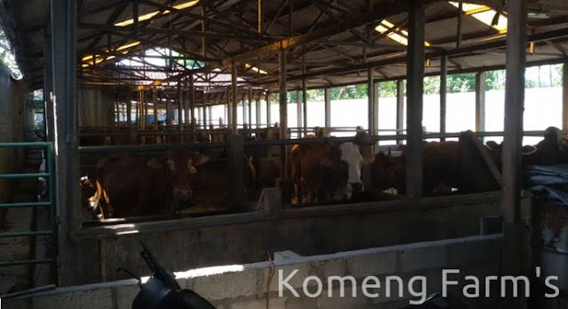 Pengiriman pakan fermentasi ke peternakan purwosari