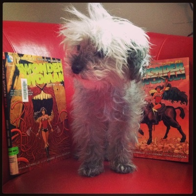 A fuzzy grey poodle, Murchie, stands on a red leather chair, his face twisted slightly to one side and his front feet pointing outwards despite his firm stance. The fur on his head stands up at a 45 degree angle. Behind him, to either side, are hardcover copies of Wonder Woman Volumes 4 and 5. 4 features Wonder Woman striding out of a mouth rimmed in a snake-like red beard. 5 features her mounted on a black horse, sword raised.