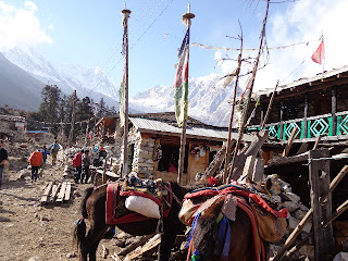 Manaslu trekking picture in the Manaslu trekking Shyla Village