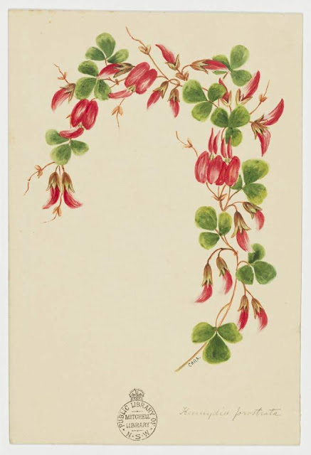 Christmas Card design depicting a red flowers.