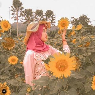 Wisata Kebun Bunga Matahari Kediri