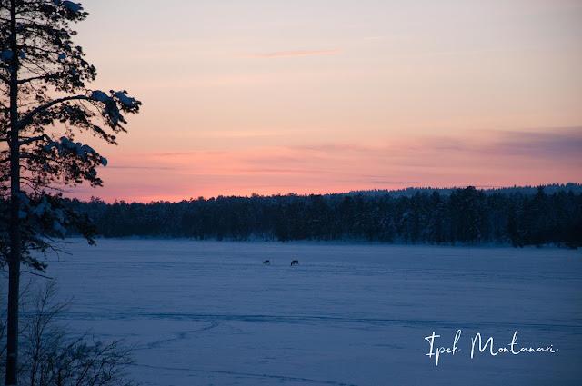 inari, ivalo, Sevettijarvi, kuzey ışıkları, Aurora Borealis, Laponya, Finlandiya, gezi blog
