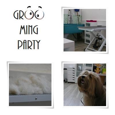 Hundeblog Einfach Socke Mein Baby War Beim Friseur