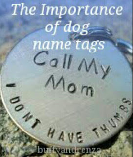 The importance of dog name tags