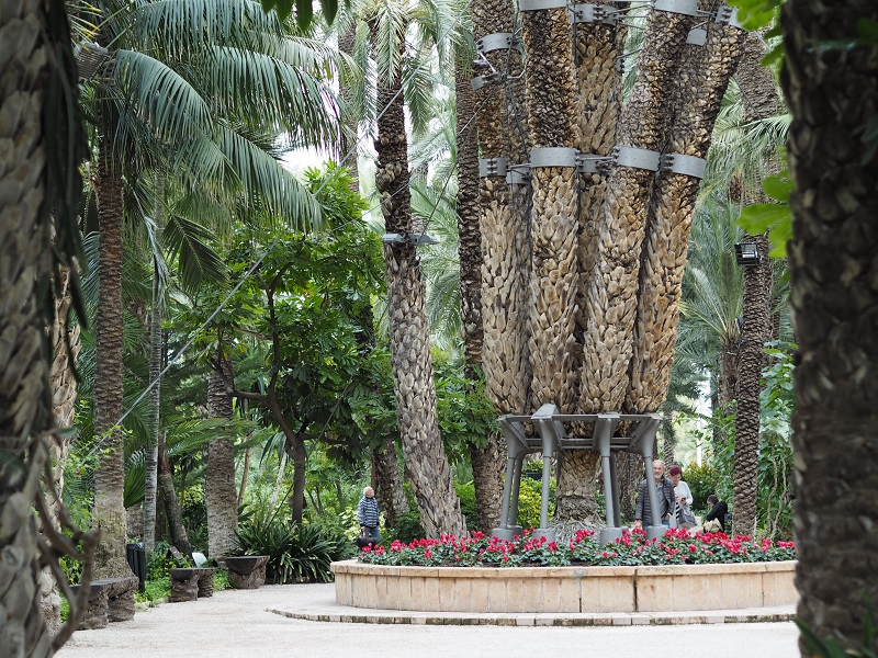 7 branches of the imperial palm, Elche