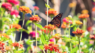 Wallpaper met roze en oranje bloemen en vlinder.