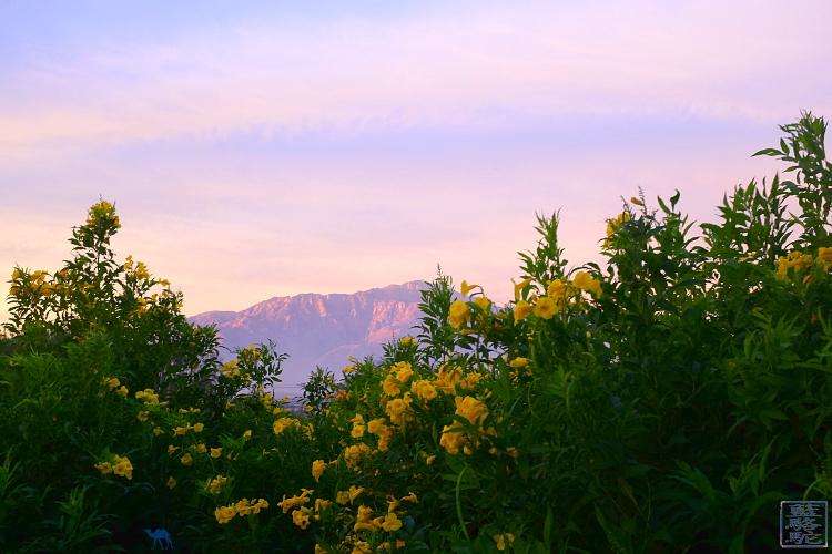 Le Chameau Bleu - Roadtrip dans Joshua Park en Californie du Sud