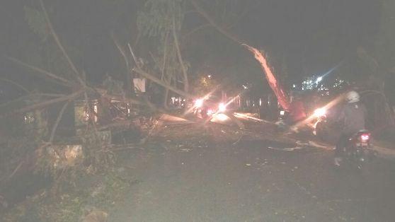 Pohon Besar Tiba-Tiba Tumbang, Di Jln. Bina Karya Benteng