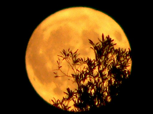 http://4.bp.blogspot.com/-Hip-2X4K_TE/ULfR0PhayWI/AAAAAAAAHso/LBb3AR1cTMw/s1600/pleine-lune-orange-et-jaune-et-son-arbre-en-ombre-chinoise-prise-de-mon-balcon.jpeg
