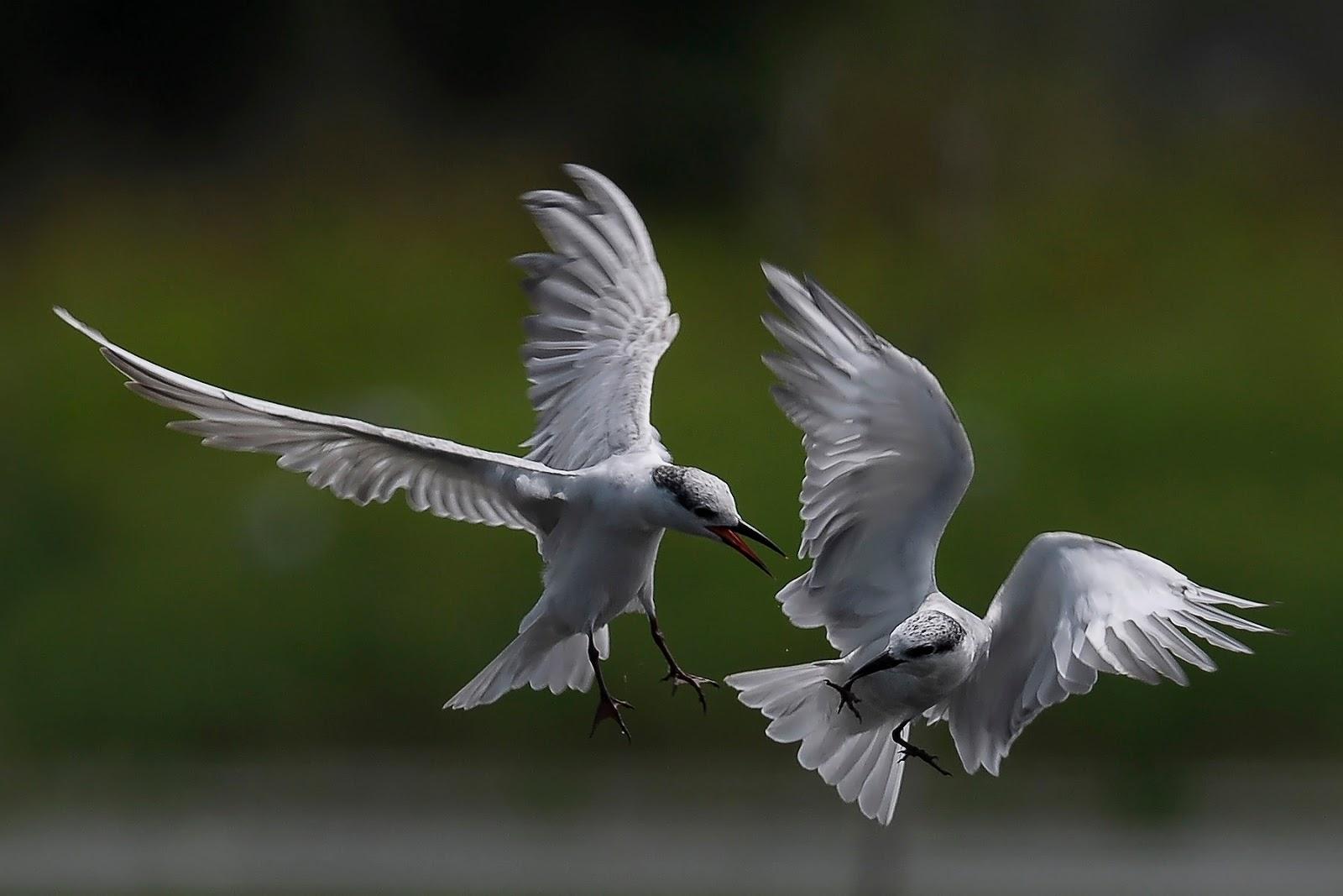 Download 900+  Gambar Burung Terbang Cantik  Terbaik Free