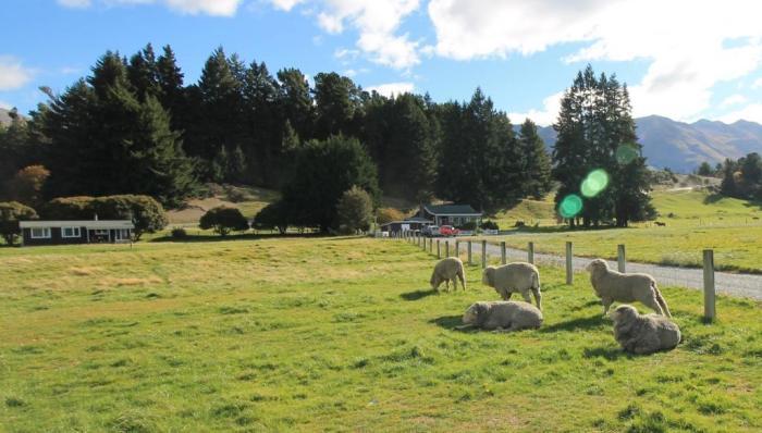 peternakan domba New Zeland selandia baru