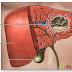 Áp xe gan đường mật – Biến chứng nguy hiểm của sỏi gan, mật