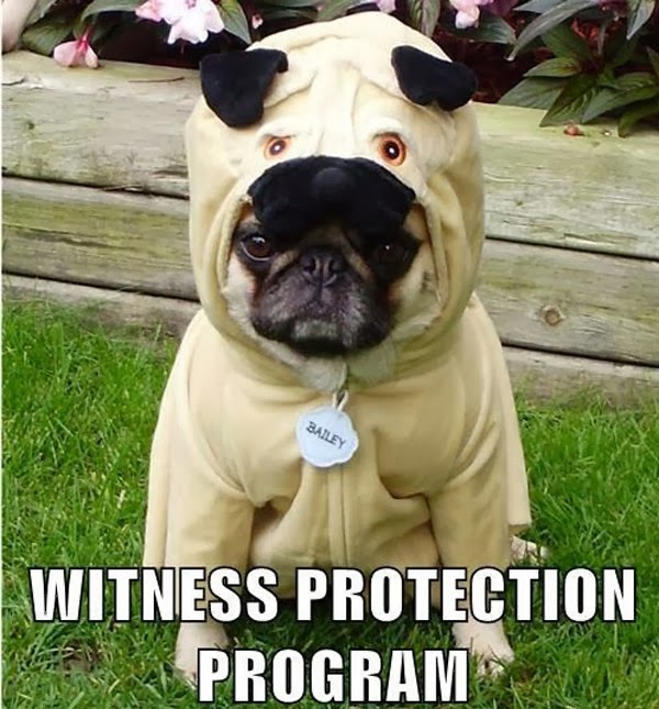 Funny pug dog wearing costume picture with caption