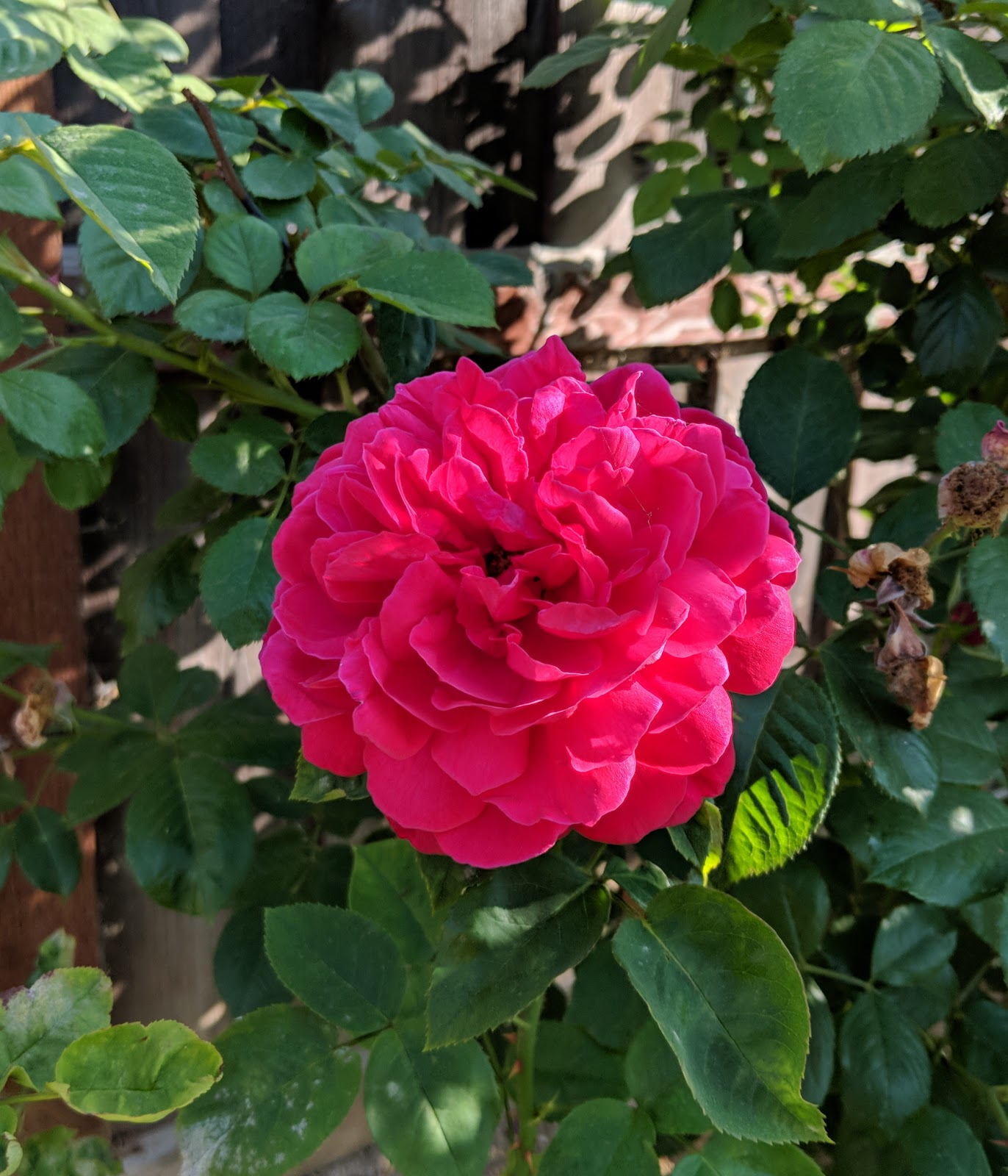 Musings Of A Bookish Kitty Weekly Mews Spring Roses Birthday