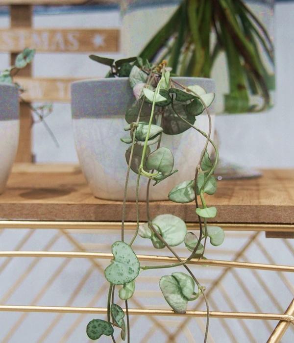 Blomster fleurs : Atelier de fleurs à Quimper