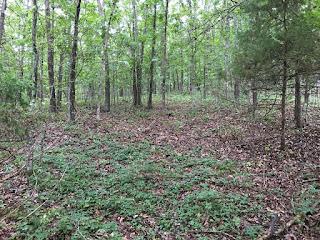 Wooded Land, Missouri Ozarks, Truman Lake Area