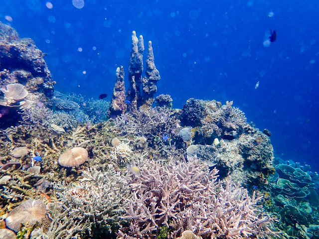 Twin reef-palawan-philippines