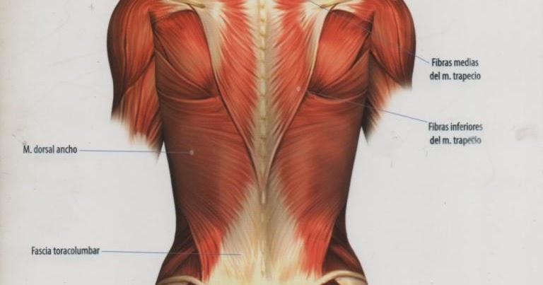 Los secretos internos de Dolor de rodilla al flexionar descubiertos