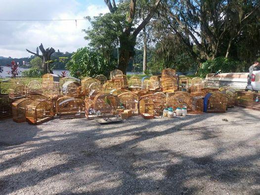 Guarda Civil Ambiental de São Bernardo do Campo apreende 104 aves silvestres