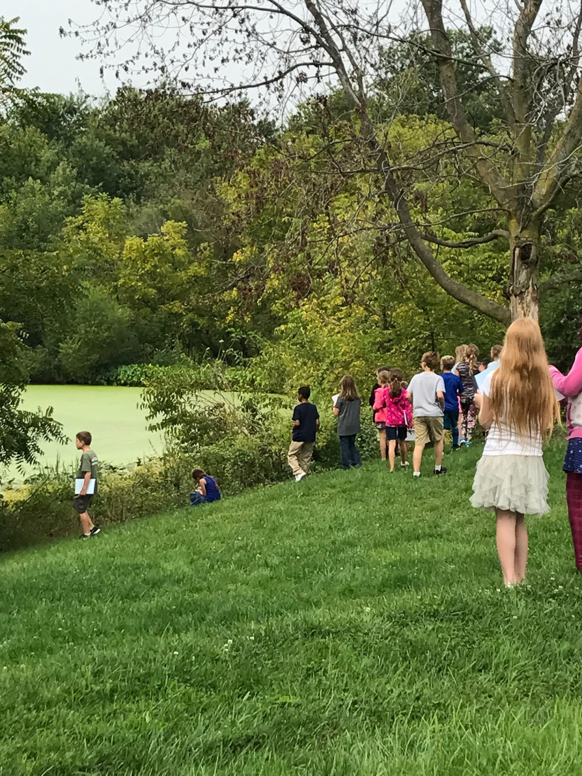 Making Observations Of The Large Pond