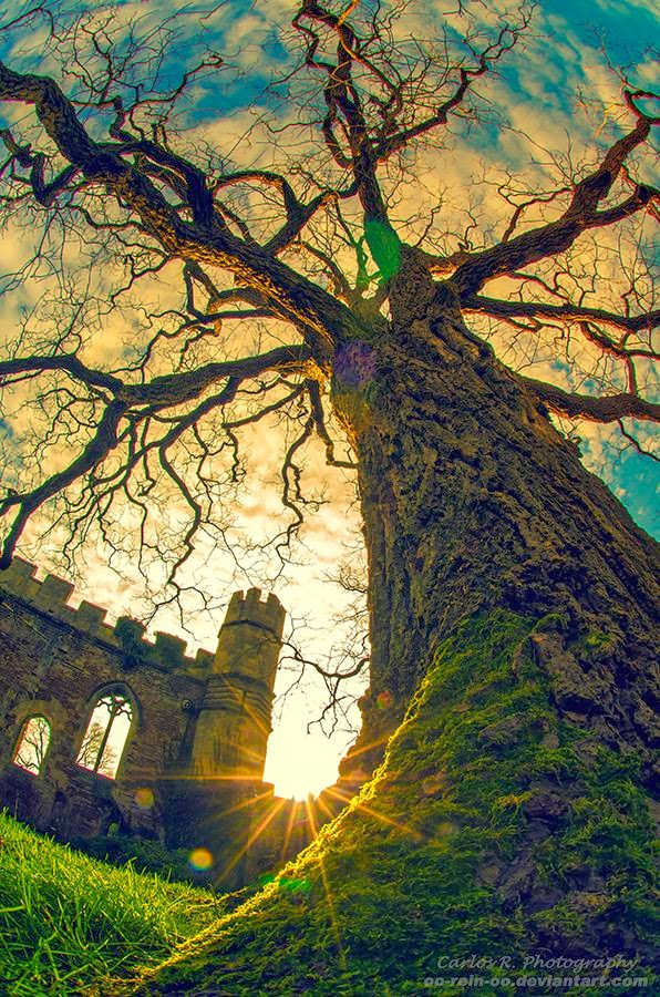 20 Amazing Pictures of Natures Creativity  Trees
