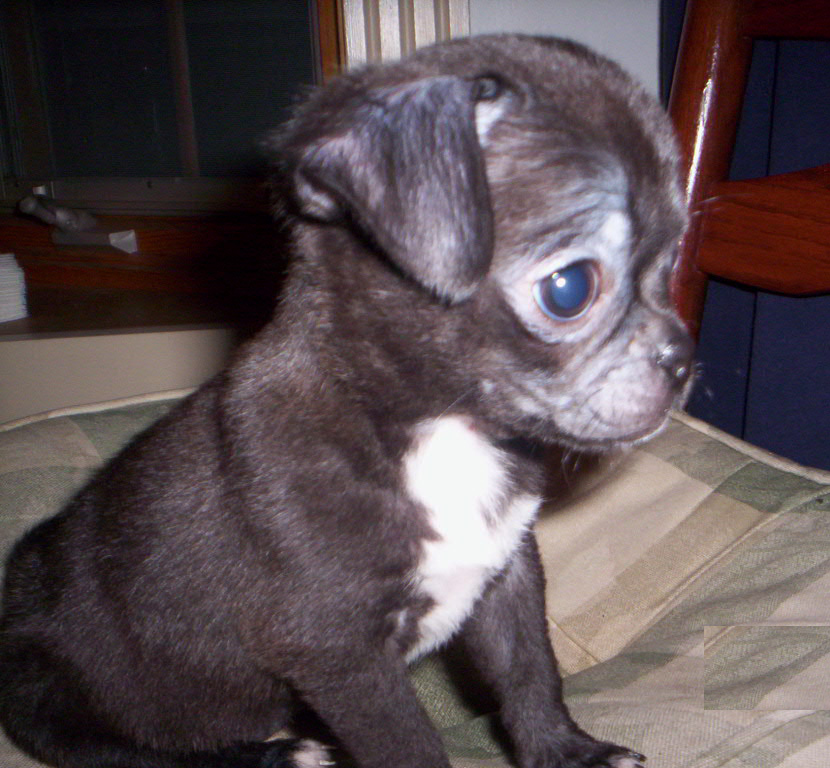 Best Cute Wallpapers 2012 Hd Animals Small Dogs For Sale