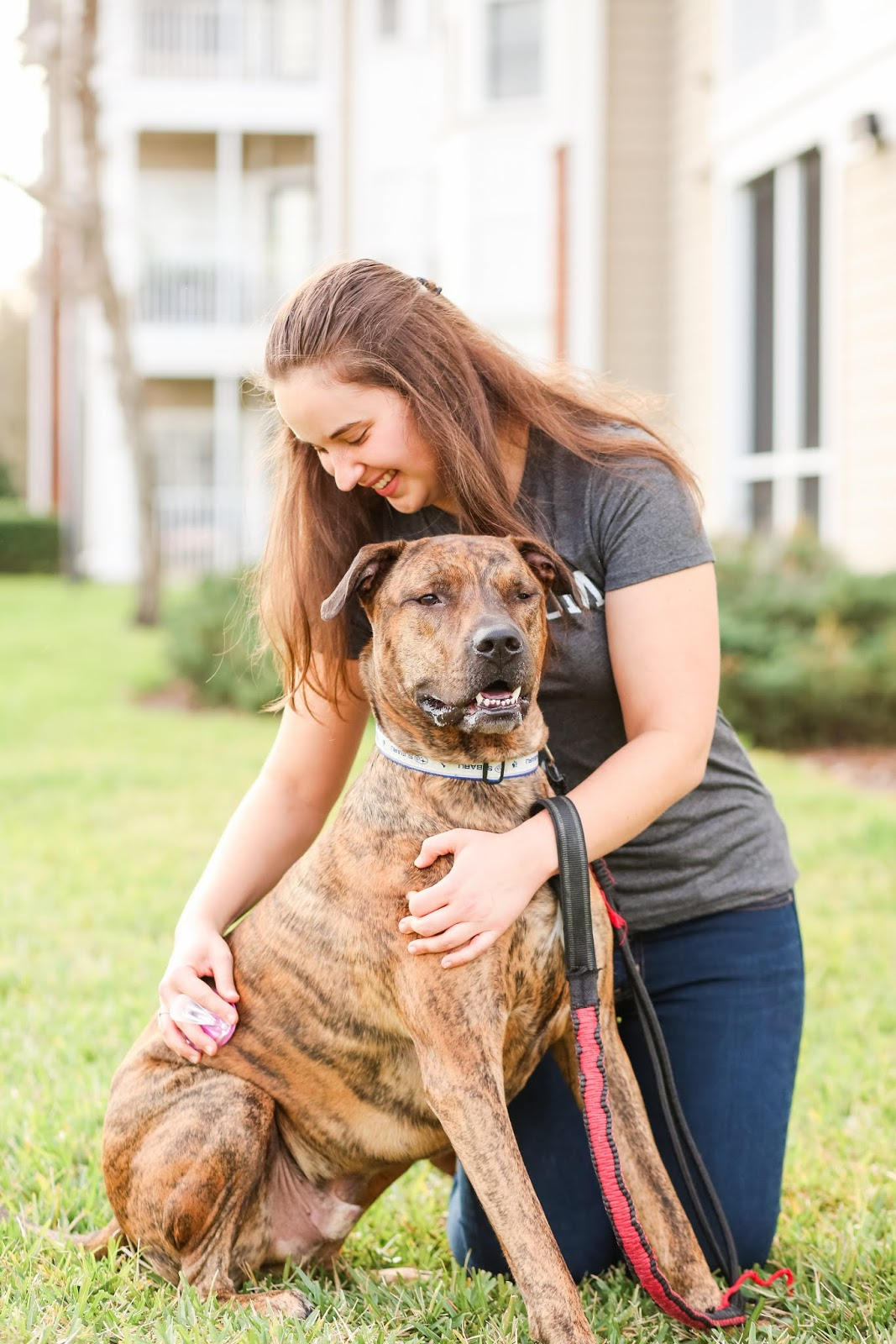 Brunette girl grooming her brindle rescue dog with a Conair dog curry comb grooming brush