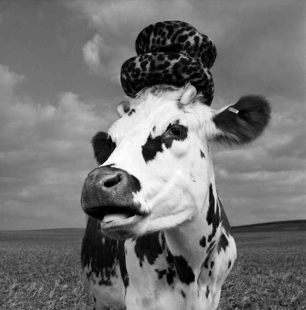 this model really is a heifer jean baptistemondino�s cow