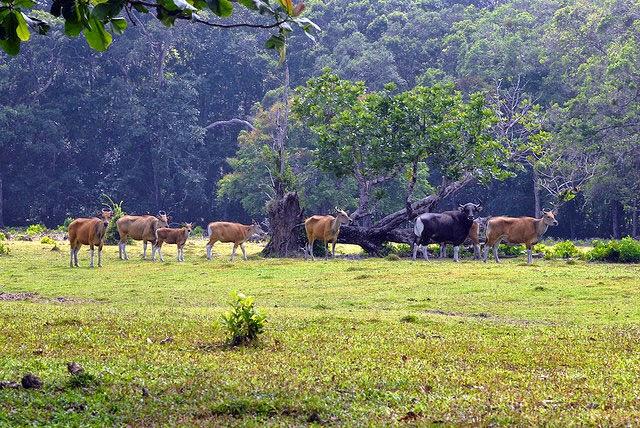 Padang Rumput Cidaon