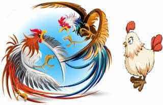 Pequeña historia con enseñanza: Los dos gallos