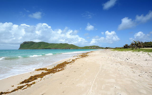 Plage de sable banc et algues avec cocotiers