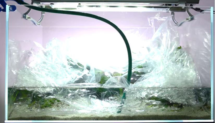 Tự làm hồ thủy sinh chơi ráy và dương xỉ - cho nước vào hồ