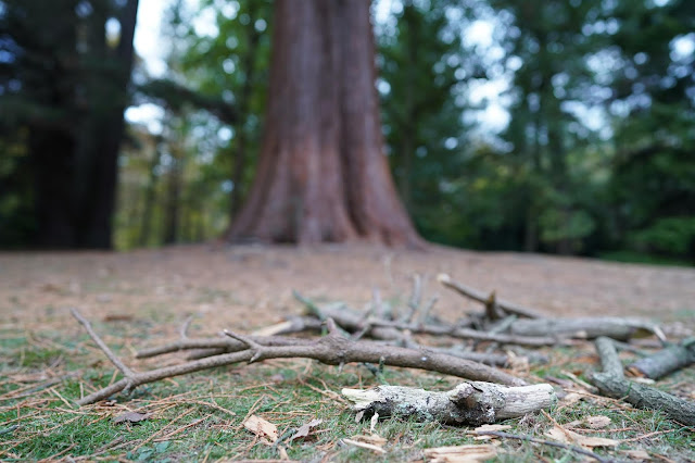 Tree with foreground in focus Sheffield Park - Sony 24mm review - Ashley Laurence
