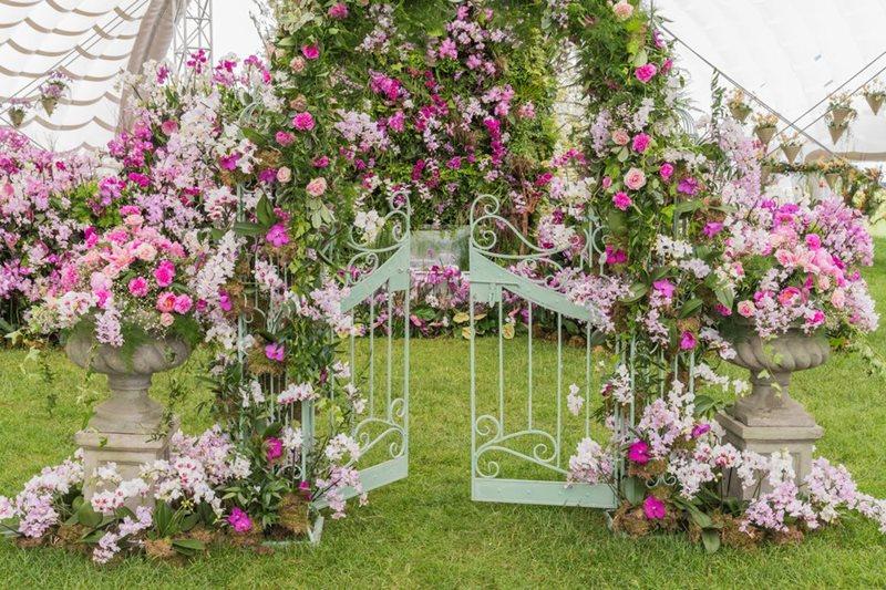 Instalación con orquídeas phalaepnosis color rosa