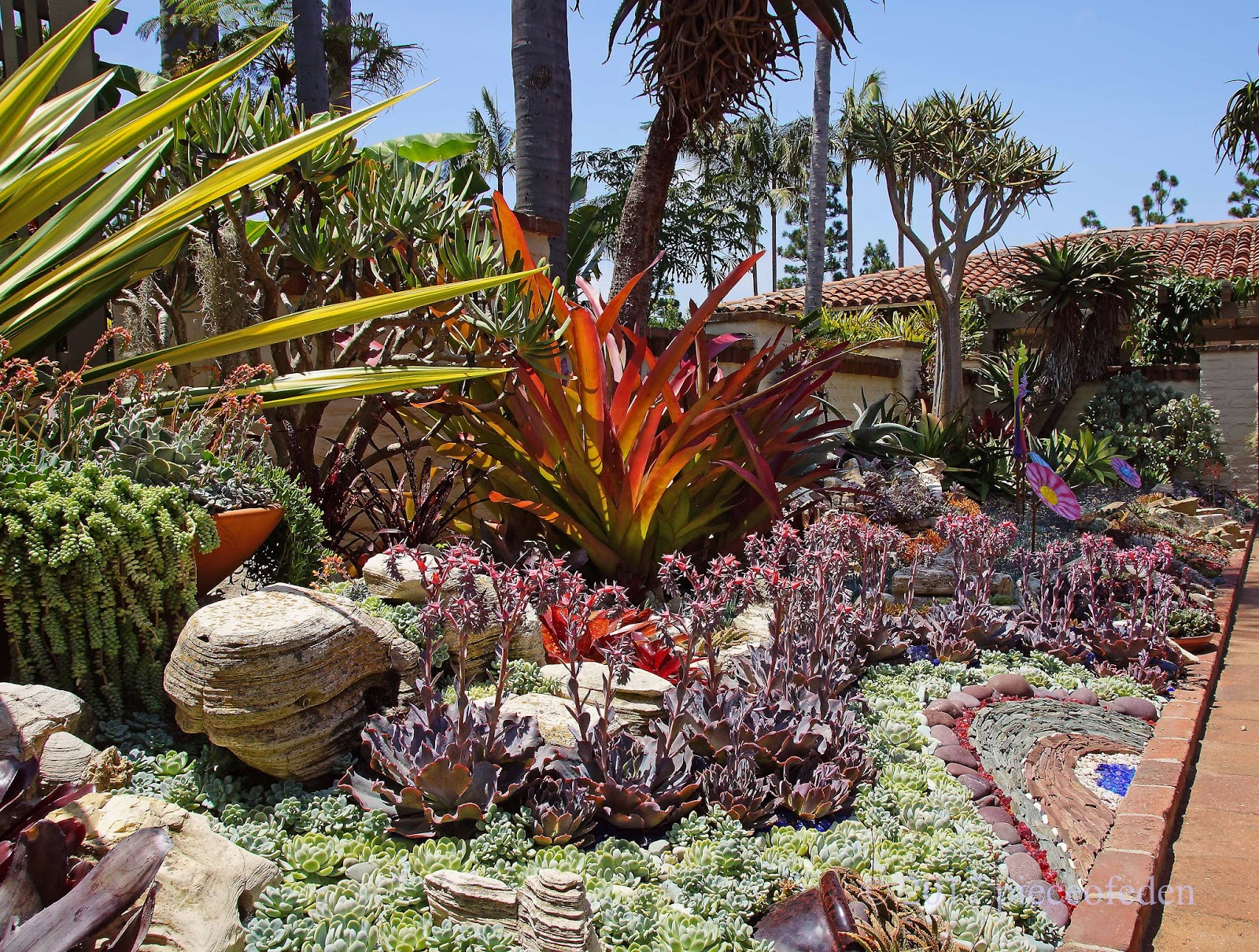 Then And Now: Sherman Gardens Succulent Tapestry/Succulent Coral ...