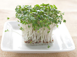 Side Effects Of Raw Sprouts