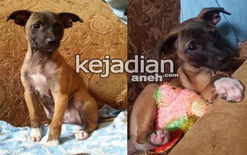Anak Anjing Dijadikan Makanan Ular Piton, Pecinta Anjing Mengecam