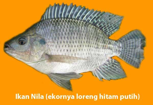 Membeli Ikan Gurame Bakar Saat Bulan Ramadhan