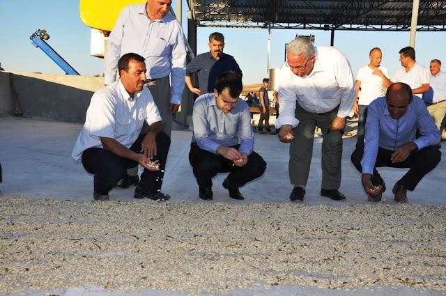 Bozova'da fıstık kavlatma tesisi açıldı