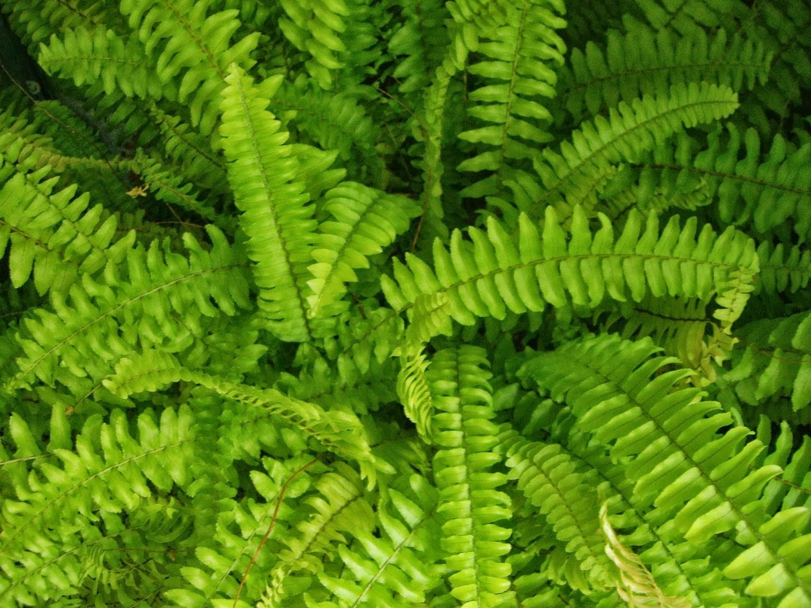 Plantas De Selva Alta: La Mar De Verde: PLANTAS EPIFITAS