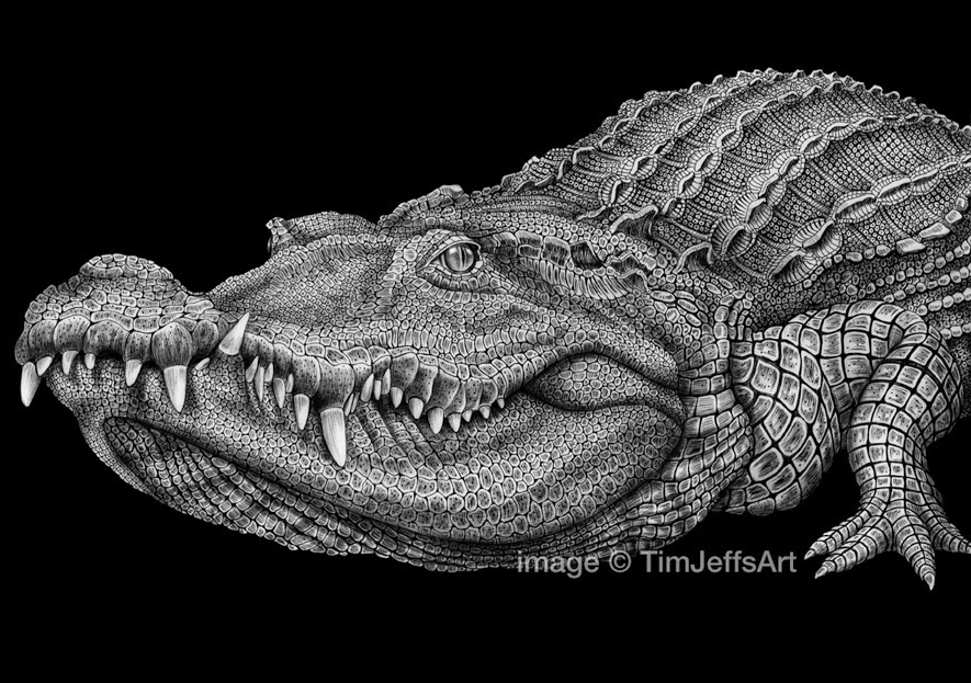 20-Crocodile-Tim-Jeffs-All-Creatures-Great-and-Small-Ink-Drawings-www-designstack-co