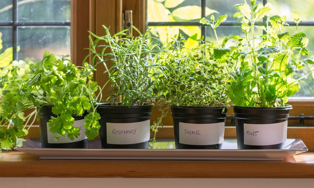 Create A Kitchen Garden 5 Easy Herbs To Grow Indoors Taste Of
