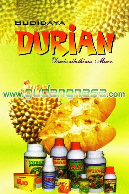 TEKNIS BUDIDAYA DURIAN