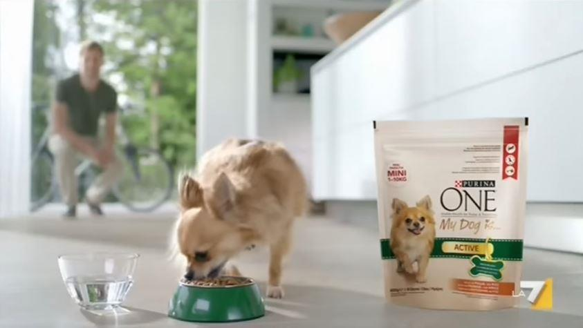 Canzone Purina One pubblicità cibo per cani piccola taglia - Musica spot Dicembre 2016