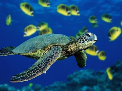 tortuga-entre-un-pequeño-banco-de-peces