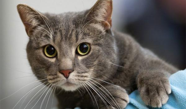 948faf79971e Όταν μια γάτα... γουργουρίζει παραπέμπει σε έναν άνθρωπο που χαμογελάει ή  σε έναν σκύλο που κουνάει την ουρά του