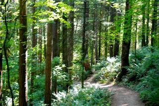 Hoyt Arboretum Portland Oregon USA