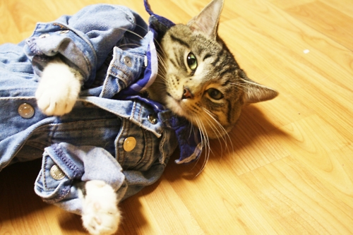 bad boy cat funny cat pictures