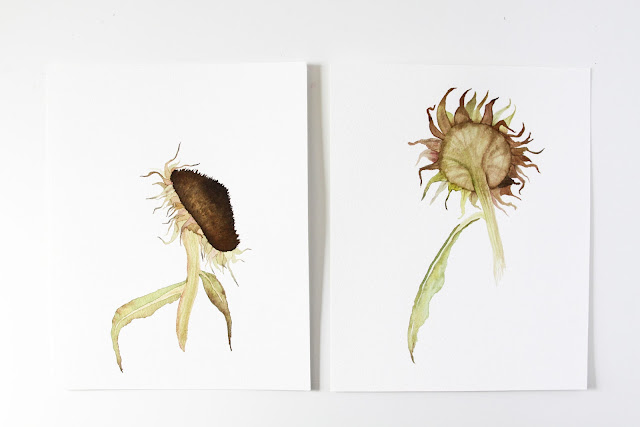 watercolor paintings, sunflowers, sunflower seed heads, Anne Butera, My Giant Strawberry