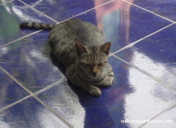 Ciri Khusus Kucing dan Fungsinya